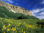 Alpine Meadow wildflower wallpaper